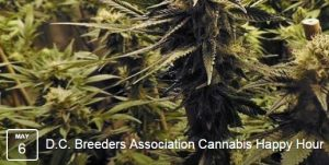 DC-Breeders-Association-Cannabis-Happy-Hour