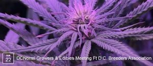 DC-NORML-Growers-Edibles-Meeting-featuring-DC-Breeders-Association