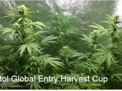 DankCapitol-Harvest-Cup-Entry