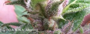 CANNA-meeting