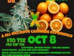 og-n-oj-cannabis-experience-october-8-2016