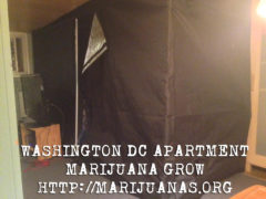Washington DC Grower