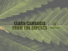 Live Online Free Cannabis Plant Chemistry Masterclass - February 28 2017