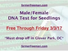 Male / Female DNA Test for Seedlings - Free to March 3 2017