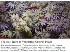 Veg Out: Intro to Vegetative Growth Phase Let's Grow Girl - Multiple March 2017 Dates