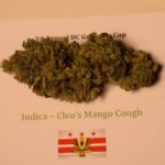 Cleo's Mango Cough By JamMaster JP 1st Place Indica