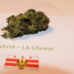 LA Cheese by The Potanist 1st Place Hybrid