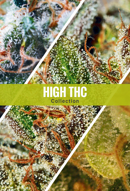 High THC Collection