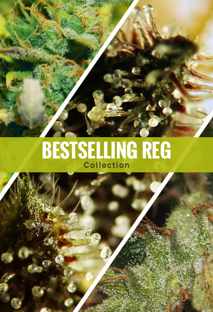 Bestselling Reg Collection