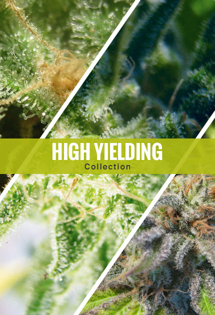 High Yielding Collection
