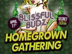 Blissful Budz Homegrown Gathering Free Clone Giveaway by Trichome Honey Concepts (DC) April 21 20118