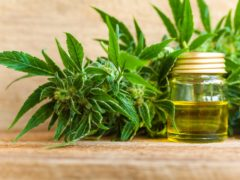 CBD Oil: Uses, Health Benefits and Risks You Need to Know