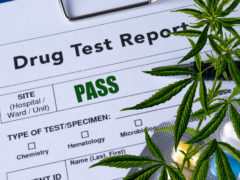 The Basics of a Cannabis Drug Test in the Workplace