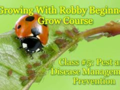 Growing With Robby Beginner Class #5: Pest and Disease Management/Prevention (DC) December 2 2018