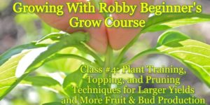 Growing With Robby! Beginner's Grow Course Class 4 (DC) November 4 2018