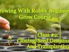 Cloning/Seed Germination and Transplanting by Capital City Hydroponics (DC) January 20 2019