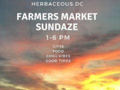 Farmer's Market Sundaze Hosted by Herbaceous DC (DC) February 17 2019