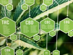 Cannabis A Brief View of the Ecology, Botany, & History by Takoma Wellness Center (DC) March 23 2019