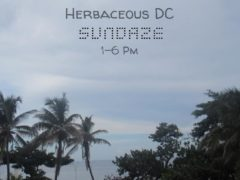 Farmer's Market Sundaze Hosted by Herbaceous DC (DC) March 24 2019