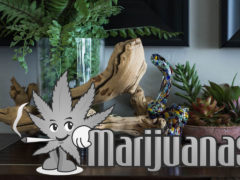 The-PufferBox-Indestructible-March-2019-Monthly-Cannabis-Box-(-PufferBox-Code-)
