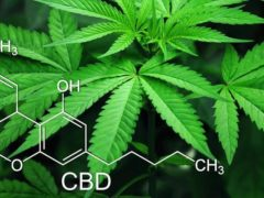 CBD 101 Navigating Hemp Plant Medicine by Smile Herb Shop (MD) July 20 2019
