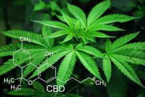 All About CBD Oil Benefits in Treating Anxiety