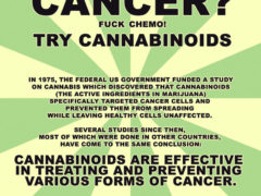 IS CANNABIS OIL EFFECTIVE AGAINST CANCER?