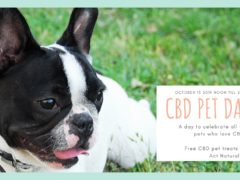 CBD Pet Day with Local Meditations (DC) October 13 2019