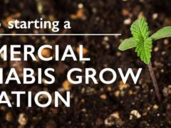 Tips and Advice on Starting a Medical Cannabis Business