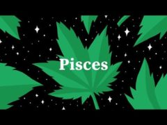 Blissful Budz Pisces Bday Bash Hosted by Trichome Honey Concepts (DC) February 29 2020