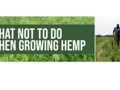 What Not To Do When Growing Hemp by VSU College of Agriculture (VA) February 26 2020