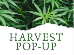 Harvest pop-up at Dispensary Works (MD) July 25 2020