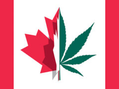 A Guide to Choosing a Cannabis Dispensary in Canada